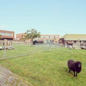 Wonen naast de kinderboerderij 🐏🐐🐓